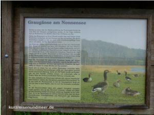 Hinweisschild zu den Graugänsen am Nonnensee