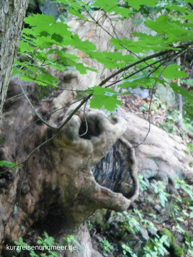 Monster im Harzer Märchenwald