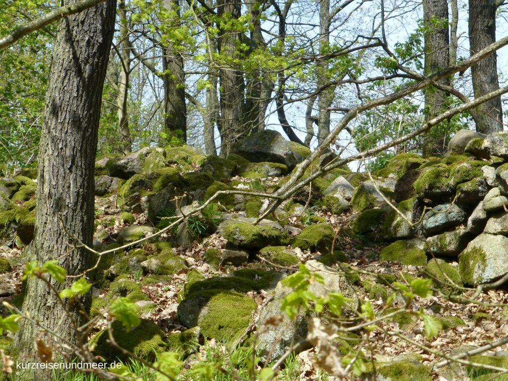 Das Bild zeigt einen Blick in den Harzer Wald. (reiseplanung Mai 2017)