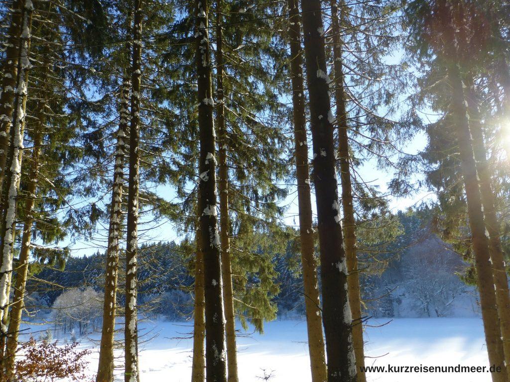 Das Bild zeigt den Winterwald im Harz.