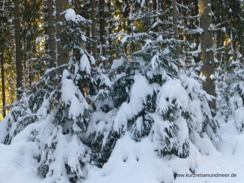Das Bild zeigt tief verschneite Nadelbäume im Harz.