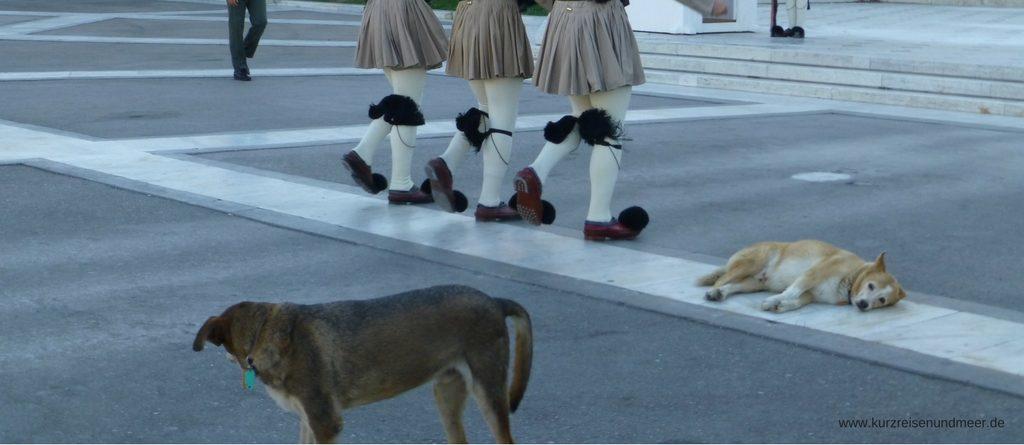 Das Bild ist von meiner Mittelmeer-Kreuzfahrt und zeigt (streunende?) Hund vor dem griechischen Parlament in Athen.