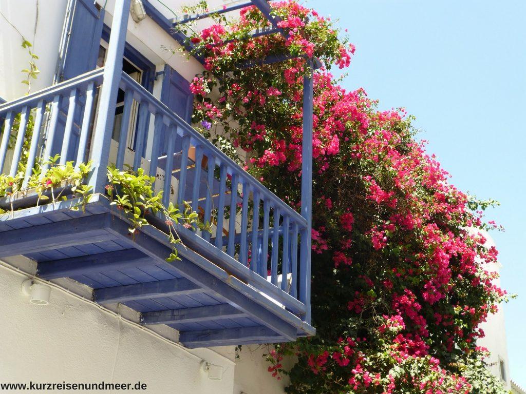 Das Bild zeigt einen blauen Balkon umgeben von roten Blüten auf Mykonos.
