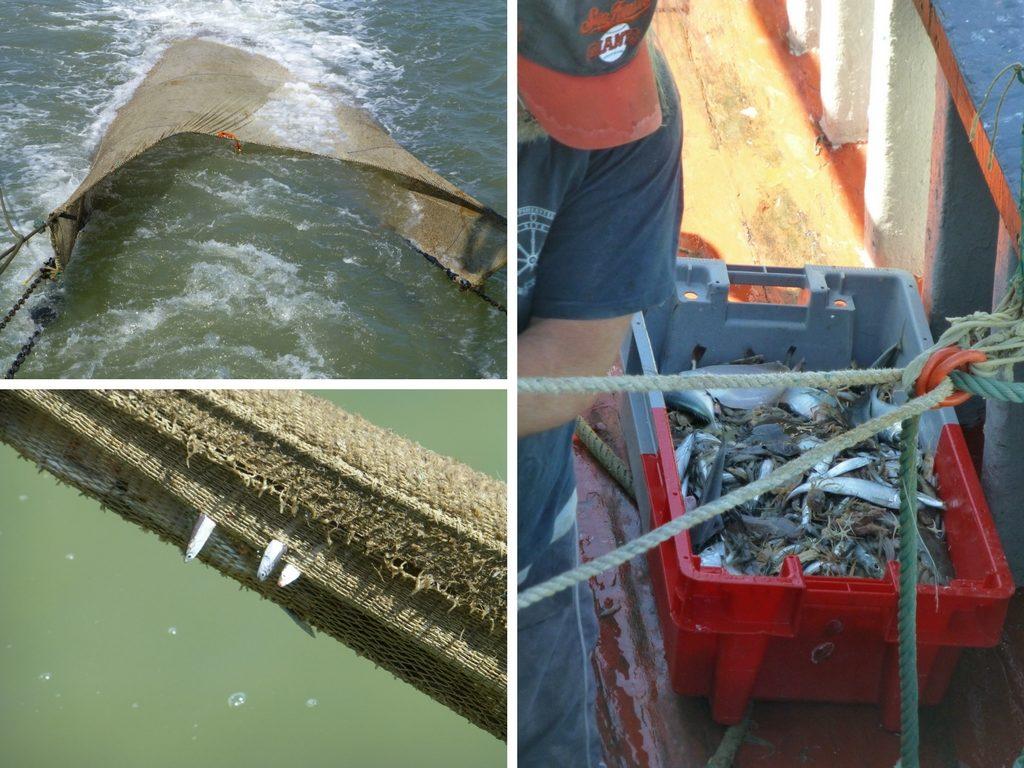 Das Netz wird herausgezogen, es sieht aus wie ein riesiges Maul (oben links), einige Fische hängen im Netz (unten links), der Fang landet in einer Kiste und wird später sortiert (rechts)