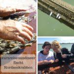 kurzreisenundmeer fischt Nordseekrabben