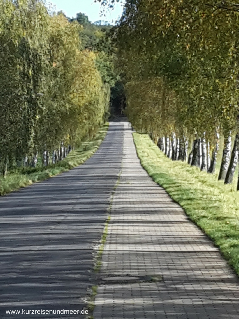 Ein seltener Anblick: eine Allee aus Birken