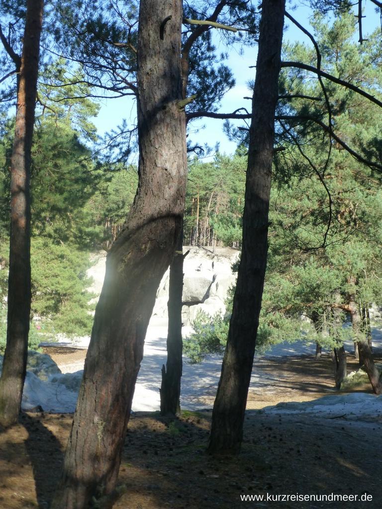 Die Sandhöhlen schimmern durch die Bäume