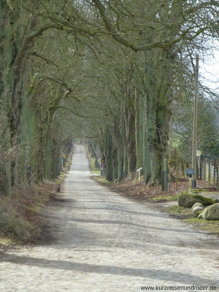 Kopfsteingepflasterte Allee nach Lancken-Granitz